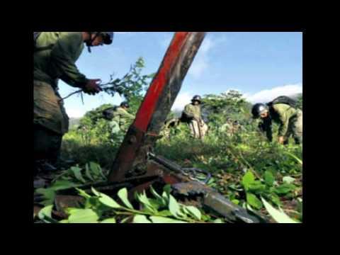 Peru News: Has Peru managed to decrease its cocaine production?