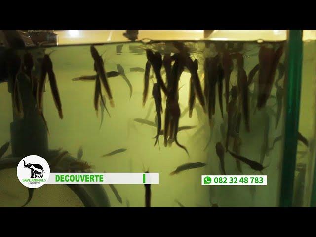 Save Animals Universe 002