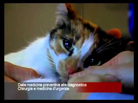 Clinica Veterinaria San Carlo BRESCIA