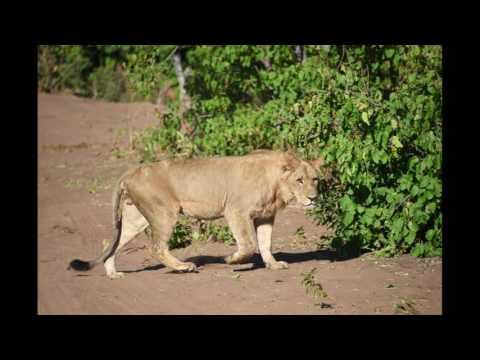 Africa Safari (13-Aug-2016)