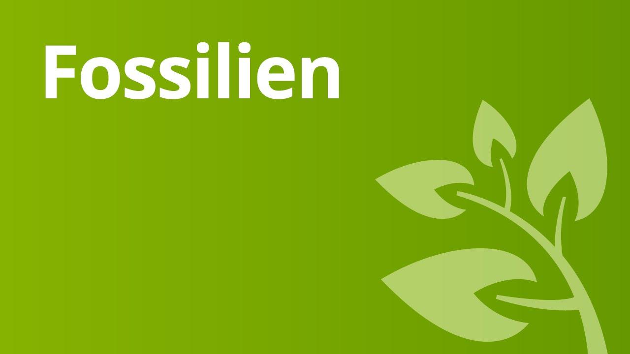 Informationen Kohlenstoffdatierung