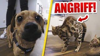 Murky & Dexter greifen Hund an!