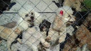 Wiggly Tails And Wet Noses ! Sc Poodle Rescue 5 6 14