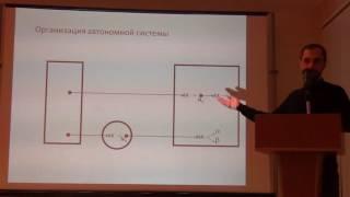 Автономная нервная система 2