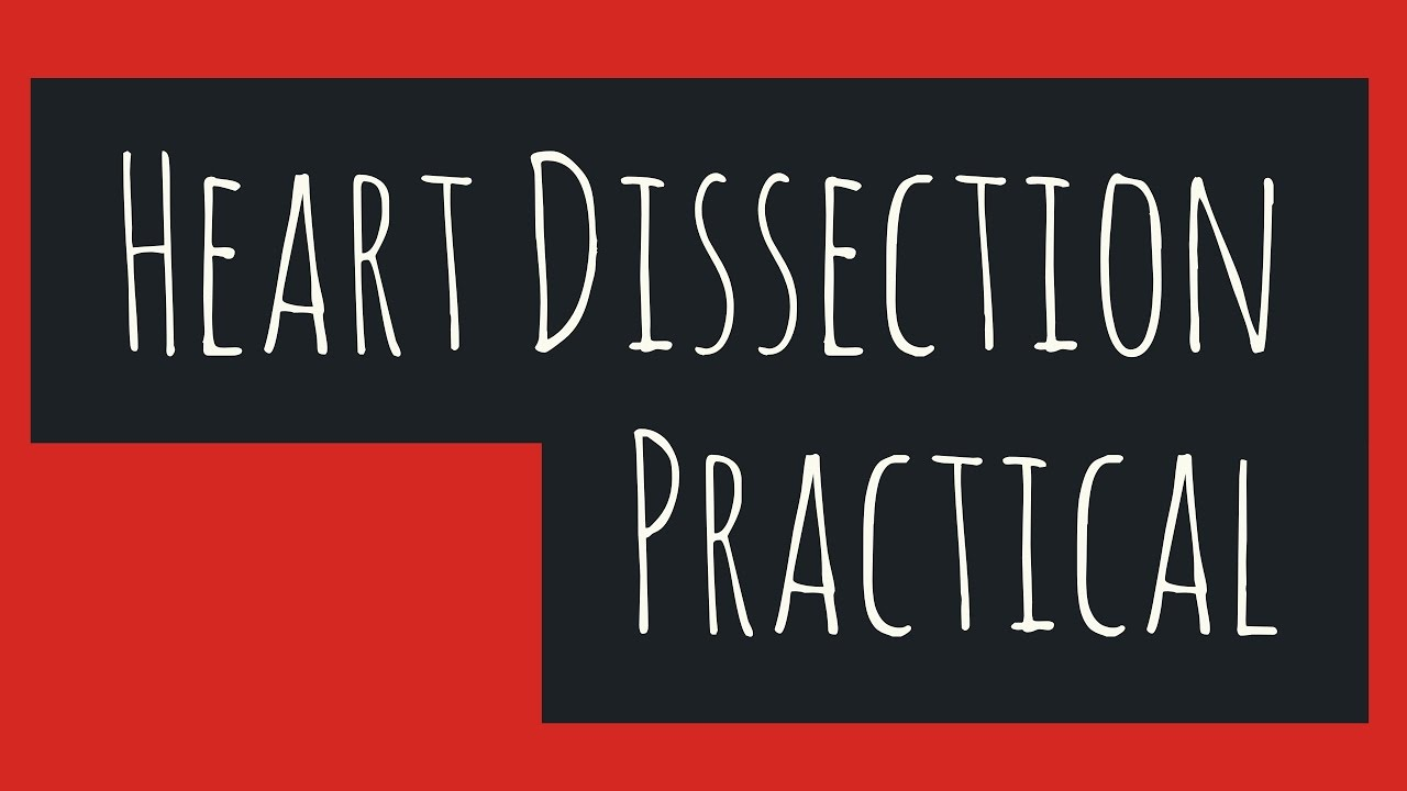 The heart dissection biology leaving cert youtube the heart dissection biology leaving cert ccuart Image collections