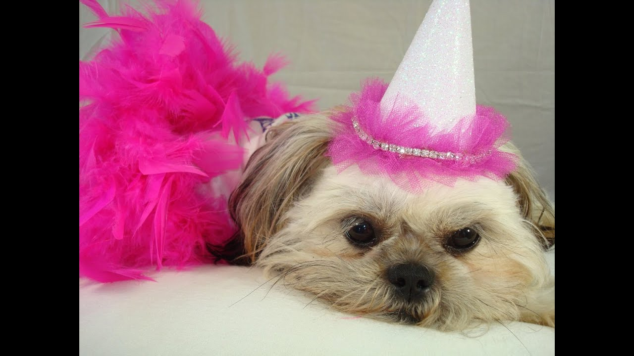 Dog Top Hat How To Make Cheap Party Theme Birthday Hats For Pets
