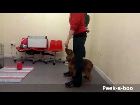 Dog Trick Video for the Uber Dude Title - Ciara & Callie