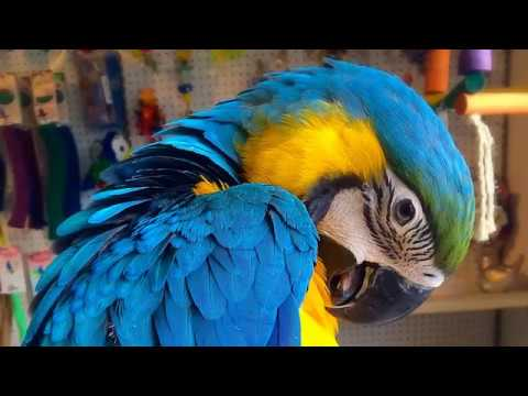 All Types Of Parrots