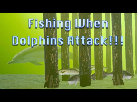 Fishing When Dolphins Attack!!!