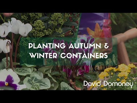 Planting autumn and winter containers