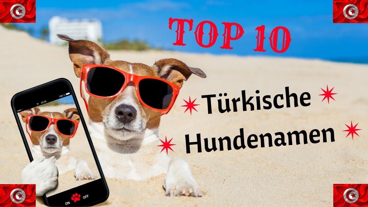 Turkische Hundenamen Unsere Top 10 Youtube