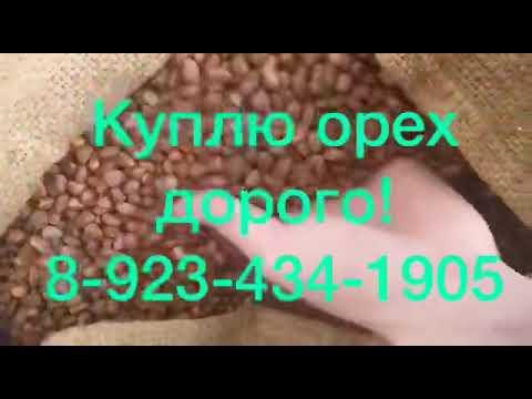 Вопрос: Где собирать кедровые шишки в Томской области?