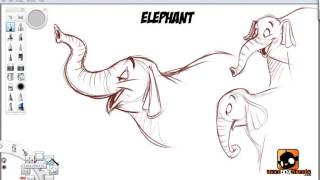 How to Draw Cartoon Animals : Jungle Animals