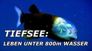 TIEFSEE: Leben unter 800m Wasser