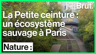La Petite ceinture : un écosystème sauvage à Paris