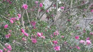 2017.11.8発売 作詞/下地亜記子 作曲/花岡優平 編曲/猪股義周.