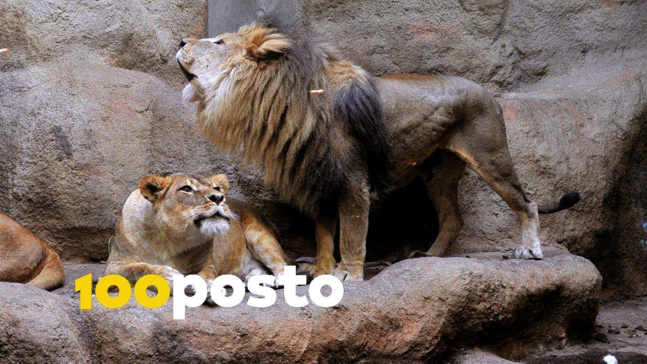 Zagreb Zoo Zagreb Destimap Destinations On Map