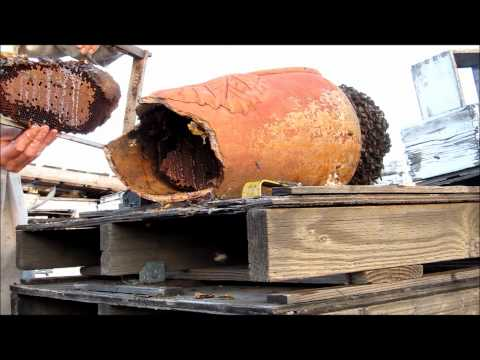 download Transferring bees from clay pot