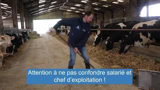 Embaucher un salarié agricole en élevage : conseils de l'Apecita