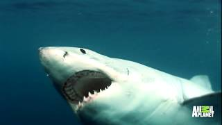 This Diver Came Eye-To-Eye With The Bull Shark That Was Chewing His Leg Off