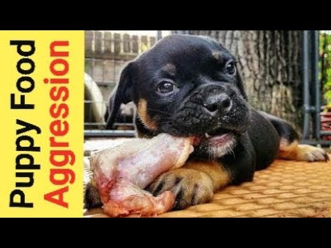 Food Aggression In Puppies & How I Deal With It