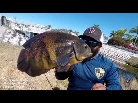 CATCH And COOK Tiger Oscar Pet Fish | Monster Mike Fishing