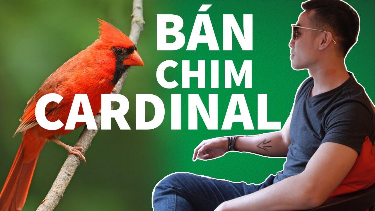 VU2DAY – [Case Study] Tư Duy Bán Áo Thun Online Với Chim Cardinals Và Hoa Daffodils