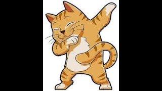 Mi gatito!