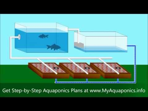 ULTIMATE Backyard Aquaponics Design! | How to Build an Aquaponic System in your Home or Backyard