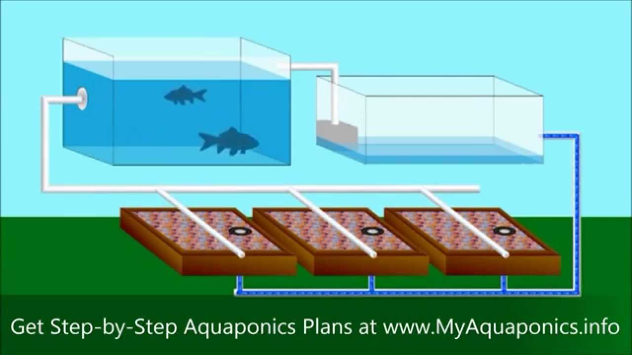 ULTIMATE Backyard Aquaponics Design! | How to Build an Aquaponic System on pond garden designs, diy garden designs, indoor aquaponics system designs, indoor garden designs, best aquaponic designs, backyard garden designs, berry garden designs, aeroponic garden designs, hydroponic garden designs, aquaculture garden designs, green garden designs, aquaponic diy designs, art garden designs, organic garden designs, greenhouse designs, for backyard aquaponic designs,
