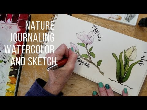 Sketch and Watercolor Magnolia and Tulips thumbnail