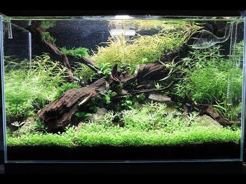 Nature Aquarium Aquascape Update - The ADA Way at Aquarium Gardens