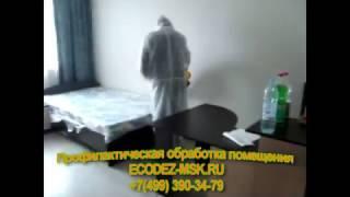 Профилактическая обработка квартир и домов от тараканов и насекомых в Москве холодным туманом(, 2017-04-06T21:07:38.000Z)