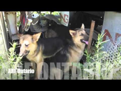 Rescue - ARF Ontario