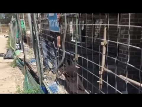 'Monster' Brown Snake Captured on Australian Building Site