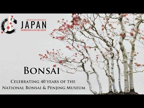 Bonsai: Celebrating the 40th Anniversary of the National Bonsai & Penjing Museum