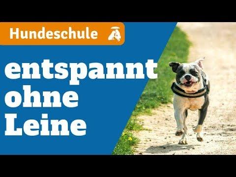 Hundeerziehung: So bleibt dein Hund IN DEINER NÄHE
