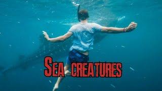Deep sea lives marine creatures Ocean Life and Nature فيلم وثائقي مدهش للحياة البحرية تحت الماء