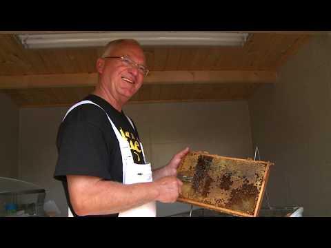 Rostocker Bienengarten boomt und wächst