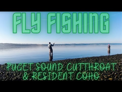 Fly Fishing South Puget Sound Beaches For Coastal Cutthroat & Resident Coho Salmon