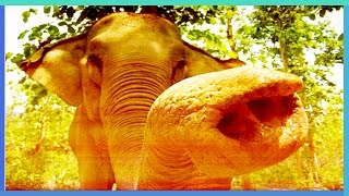 В Индии слон в течение 20 минут крушил автомобили