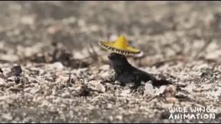 Iguana vs Snakes vs Les Humphries Singers
