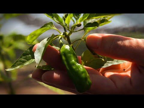 Pure Land Organic
