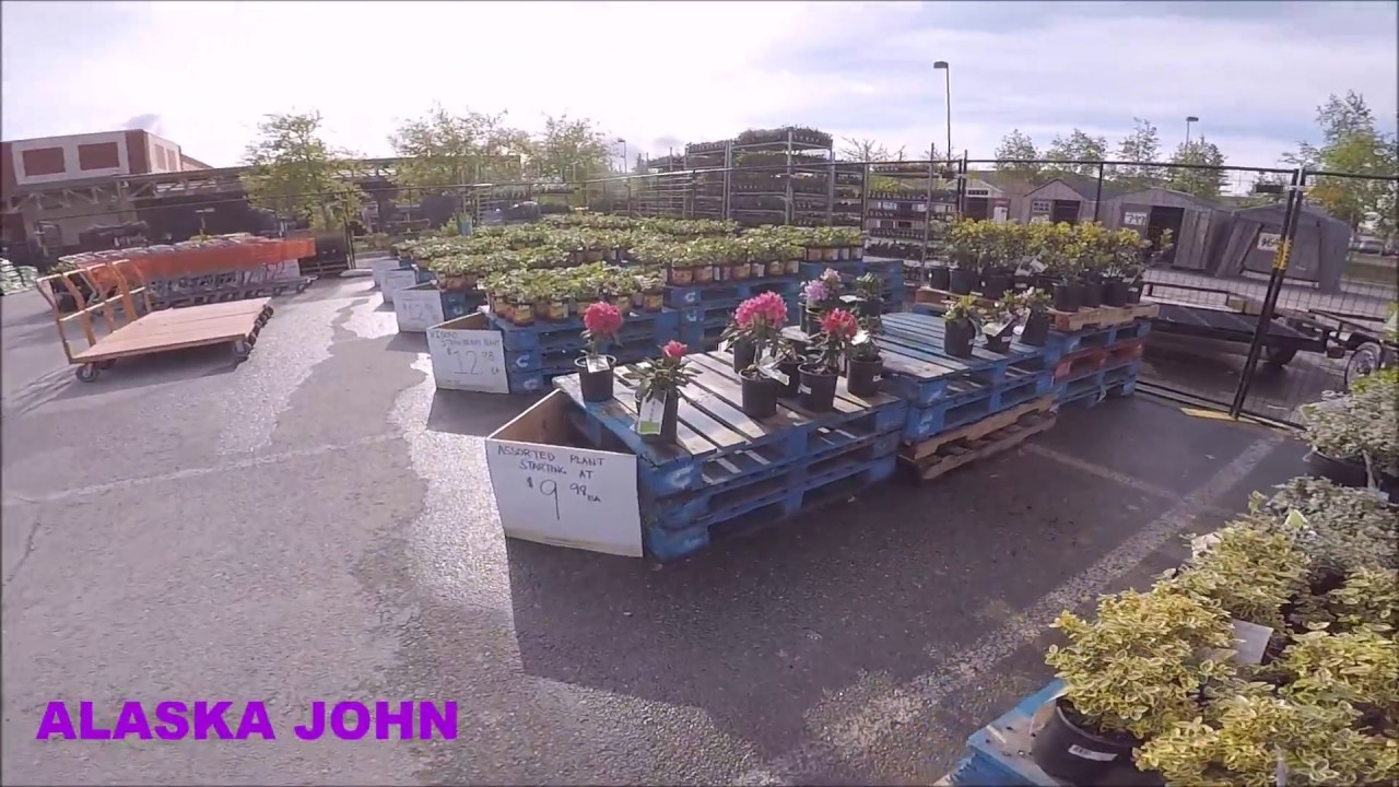 Anchorage Alaska Home Depot Flowers Shrubs Trees Etc Youtube