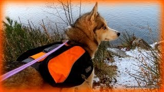 Backpacking With Your Dog!  How To Wear Out A Siberian Husky - Outward Hound Backpack