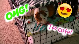 IM QUITTING YOUTUBE?! STS #3  GuineaPigFans