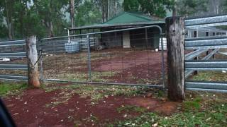 Hailstorm Putty 29th January 2017