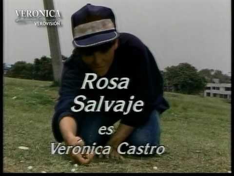 Entrada de la telenovela Rosa Salvaje