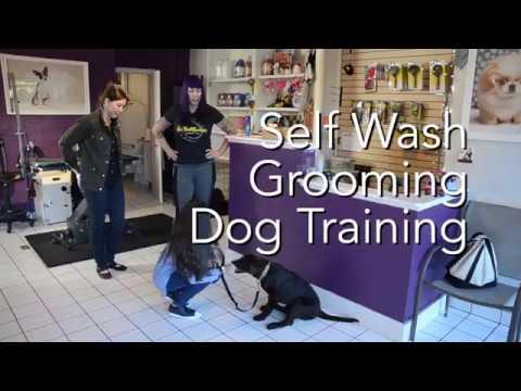 Heavenly dog in denver co self dog wash grooming and dog heavenly dog in denver co self dog wash grooming and dog training solutioingenieria Images