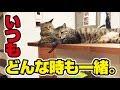 いつも仲良し双子の兄弟猫!〜Always a good twin brothers cat!〜